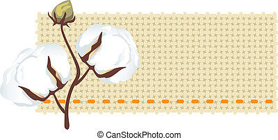 algodão, ramo, com, tecido, (gossypiu