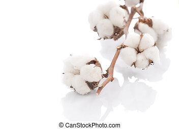 algodão, sobre, branca