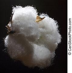 algodão, tigela