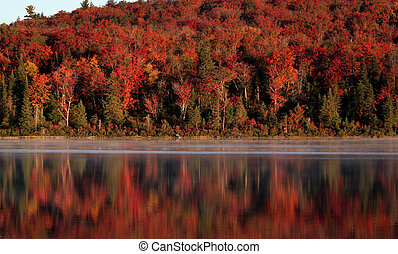 Algonquin Forest Reflection