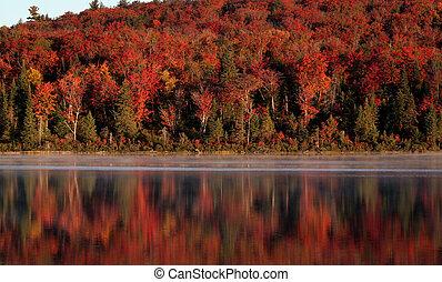 algonquin, foresta, riflessione
