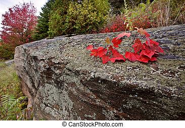 Algonquin Park Muskoka Ontario