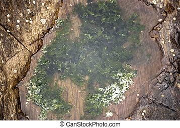 algue, dans, les, mer