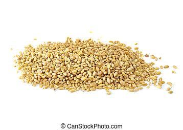 algum, cevada, grãos