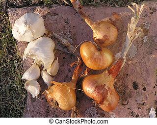 alho, colheita, cebola
