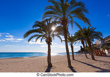 Alicante San Juan beach of La Albufereta with palms trees in...