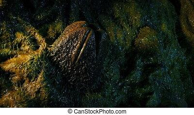 Alien Egg Pod In Slimy Nest - Slimy egg sack in organic wall...