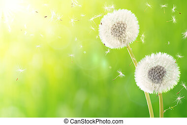 aliento, de, primavera, -, alergia
