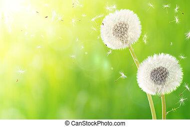 aliento, primavera, alergia, -