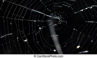 Alight spider web on the black background in full