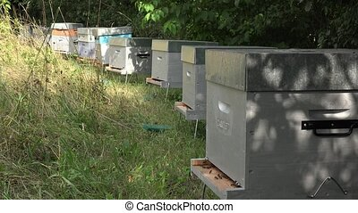Alignment of hives in the shelter of trees