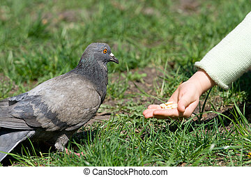 alimentação, criança, pássaro