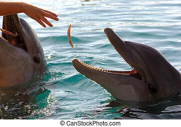 alimentación, el, delfines