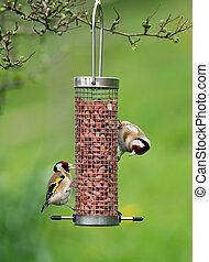 alimentación, goldfinches