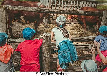 alimentado, antigas, observar, fazenda, isolado, vacas, crianças
