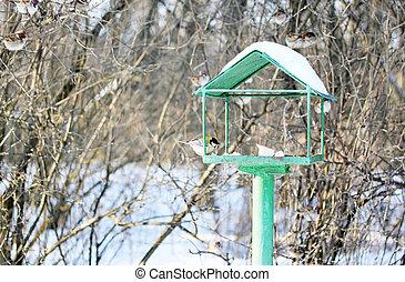 alimentador, aves