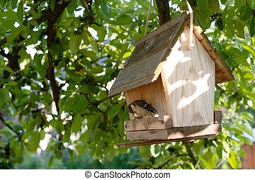 alimentador, comida, verano, titmouse, pájaro