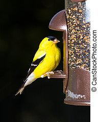 alimentador, pájaro, goldfinch, comida