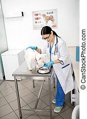 alimentation, après, chien, long, examen, vétérinaire