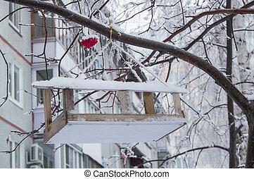 alimentation, bois, arbre, neige, creux, pendre, rowan, couvert, oiseaux