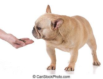 alimentation, chien, main