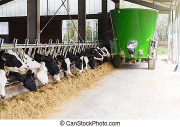 alimentation, manger, vert, écurie, vaches, pétrolier