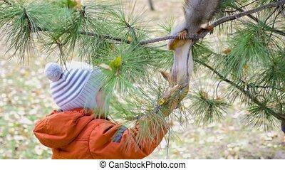 alimentation, parc, écureuil, main, enfant