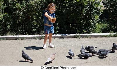 alimentation, pigeons, parc, enfant, girl, oiseaux
