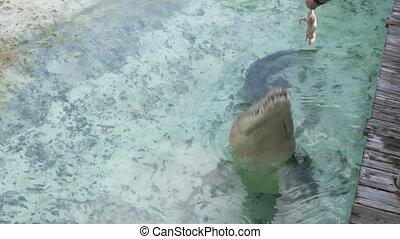 alimentation, scène, crocodile, zoo, eau, turbulence