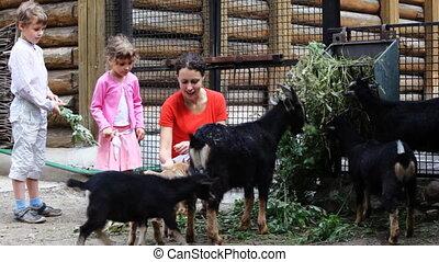 alimentation, village, jeunes enfants, mère, chèvres