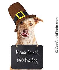 alimentazione, non, ringraziamento, cane
