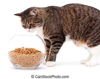 alimento, cinzento, secos, gato