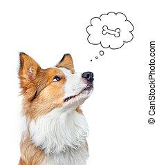 alimento, collie, frontera, perro, soñar