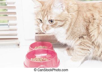 alimento, come, vermelho, gato