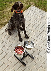 alimento, conceito, cão