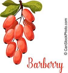 alimento, fruta, desenho, temperos, barberry, ícone