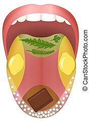 alimento, lengua, sabor, áreas, sabor