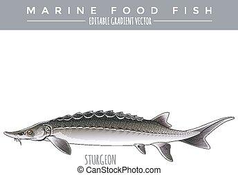 alimento, sturgeon., peixe marinho