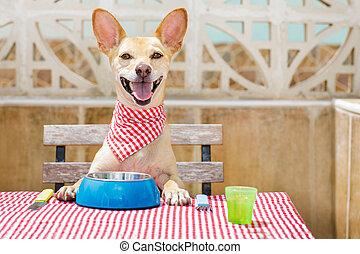 alimento, tazón, comida, perro, tabla