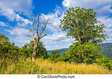 alive and dead trees on hillside on summer day - alive and...
