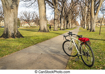 Allee of old American elm trees with bicycle - Touring bike ...