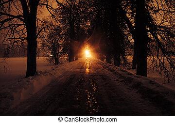 allee, von, bäume, an, night.