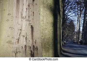 allee, von, bäume