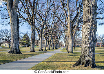 Allee with old American elm trees in early spring - the Oval...