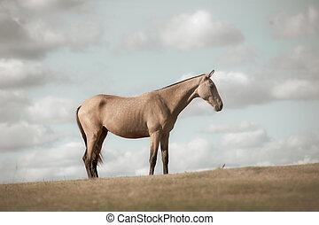 alleen, akker, paarde