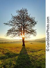 alleen, boompje, op, weide, op, ondergaande zon , met, zon, en, mist, -, panorama