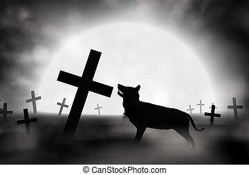 alleen, wolf