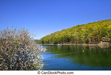 Allegheny national forest - Scenic Allegheny river flowing...