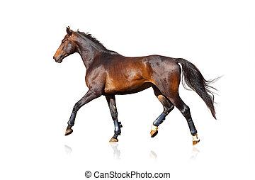 allegro, cavallo, isolato, sopra, uno, bianco
