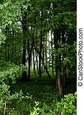 allemagne, forêt
